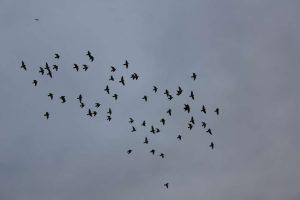 Vogelschwarm, 2010