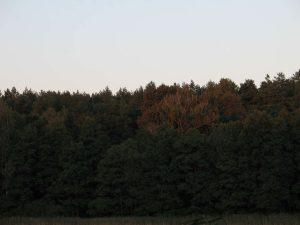 Dambecker See, Mecklenburg-Vorpommern, 2007