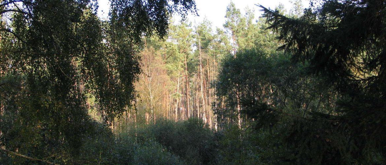 Mecklenburger Landschaft, Kratzeburg, 2007