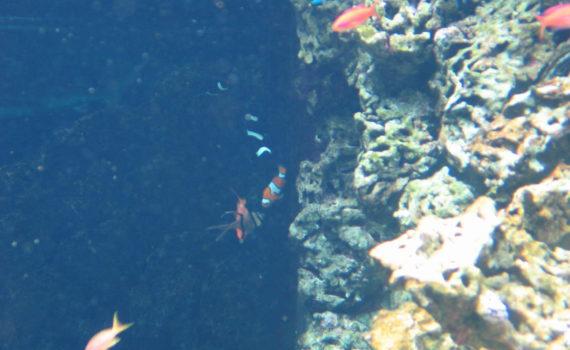 Aquarium im Museé Oceanographique, Monaco, 2006