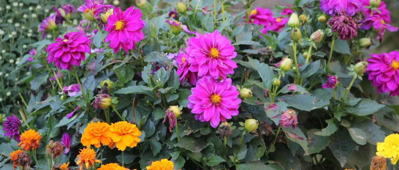 Blumenimpressionen, Hannover, 2011
