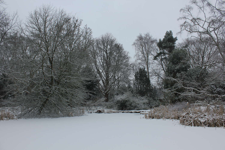 Am Moorweiher im Berggarten, Hannover, 2013