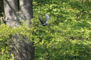 Vogel im Tierpark, Hannover, 2014