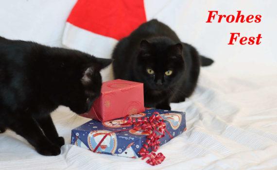 Minni und Pascha wünschen ein Frohes Fest!