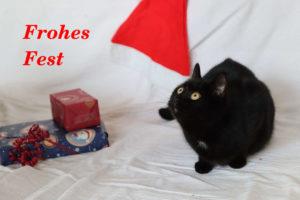 Minni und Pascha (nicht im Bild) wünschen ein Frohes Fest!