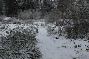 Am Moorweiher im Berggarten, Januar 2013